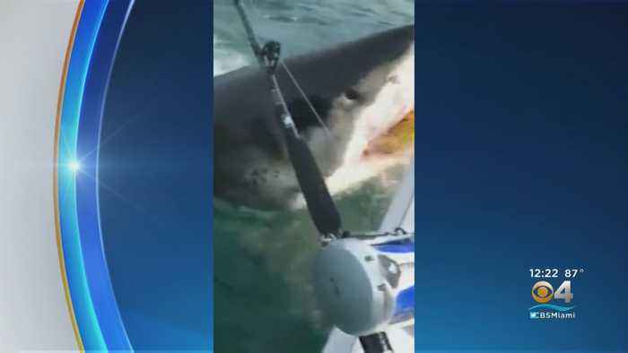 Fishermen Encounter Great White Shark Off New Jersey Coast