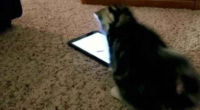 Kitten Tries to Catch Virtual Mouse
