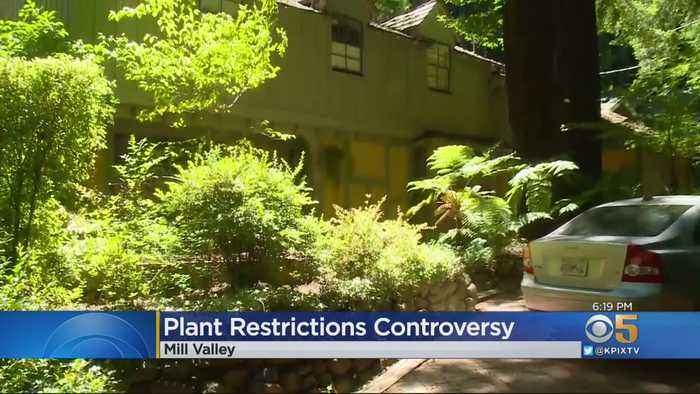 'Culture Change' May Come For Mill Valley Residents As City Develops Fire Prevention Plan
