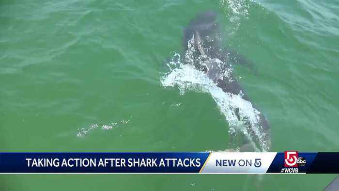 New plan to protect people from shark attacks