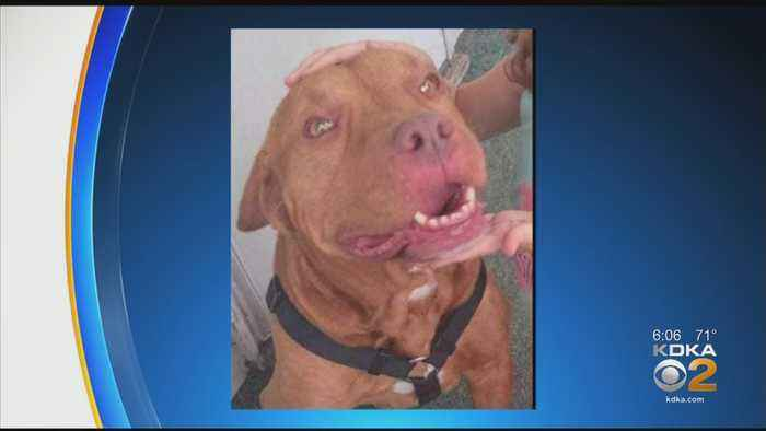 Westmoreland Couple Facing Animal Cruelty Charges