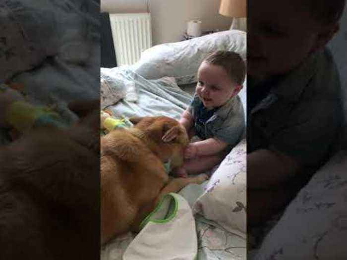 Baby Giggles After Touching Dog's Face
