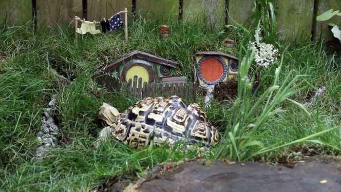Man Brings To Life The Shire From The Lord Of The Rings In His Back-garden As Builds Mini-hobbiton For His Pet Tortoise