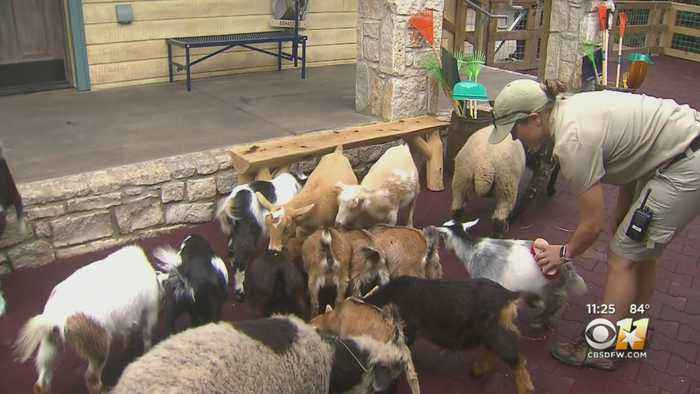 Wild Wednesday: Fort Worth Zoo Toyota Children's Ranch
