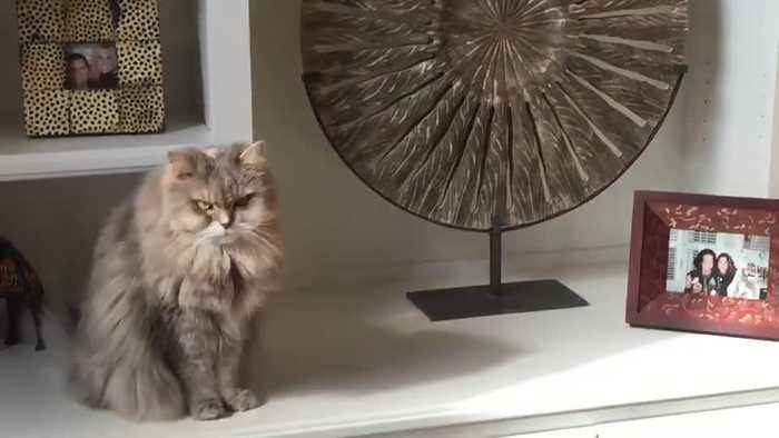 Couple paid $25,000 to clone their beloved cat