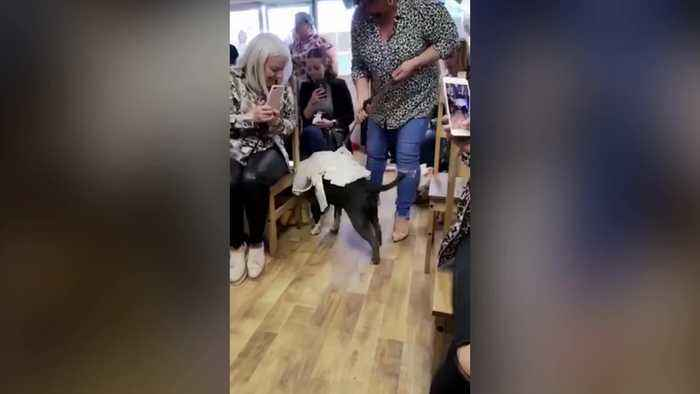 Bulldogs exchange 'bow vows' at their wedding