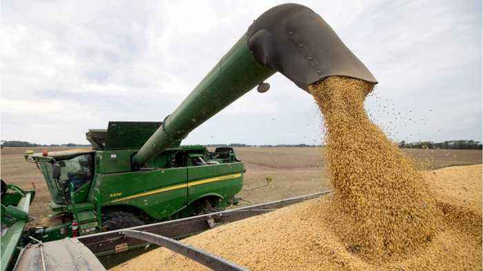 Ahead of Trump-Xi meeting, USDA announces huge soybean sale to China