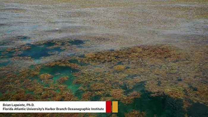 Scientists Have Discovered The World's Biggest Seaweed Bloom