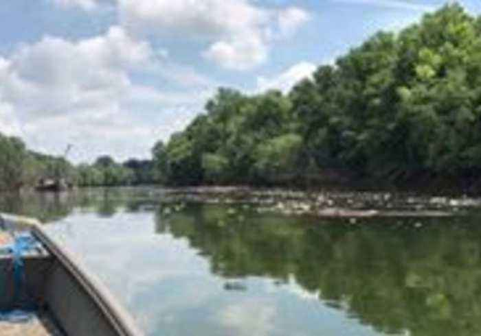 Dead Fish Float on Kentucky River Following Jim Beam Warehouse Fire