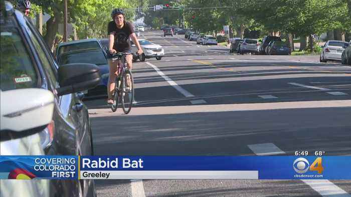 Health Officials Search For Rabid Bat Witnesses