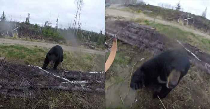 A Black Bear Attacked A Hunter In Canada - And He Filmed The Whole Thing On His GoPro