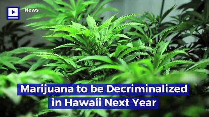 Marijuana to Be Decriminalized in Hawaii Next Year