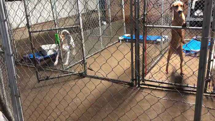 Community Fosters Animals After Shelter Appeals for Help During Arkansas Flooding