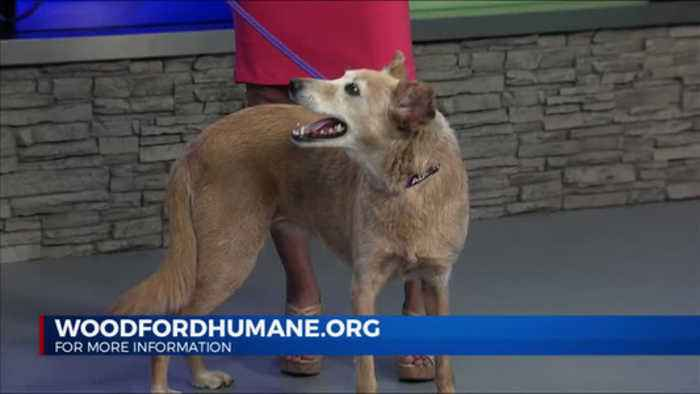 Pets Need Pals: Woodford Humane Society