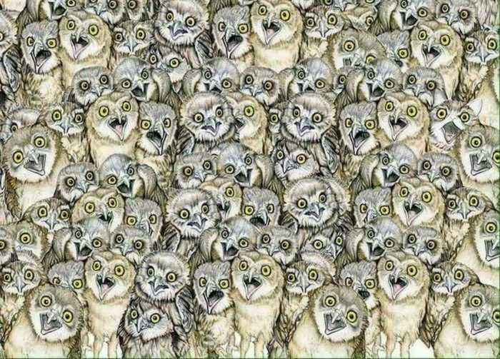 85% Of Internet Users Can't Find The Cat Hidden In This Picture