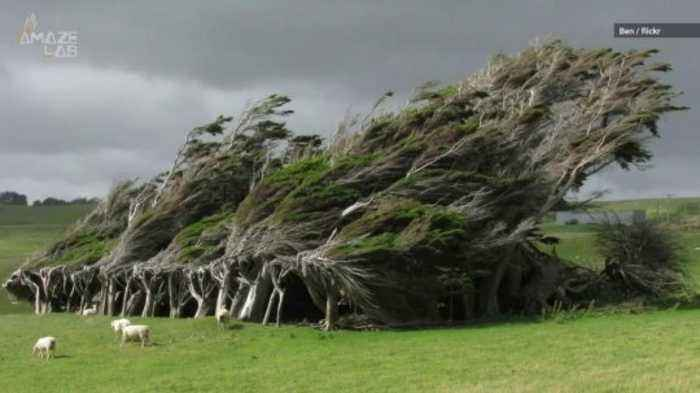 Wacky, Windblown Trees Grow Sideways on New Zealand's Southernmost Point
