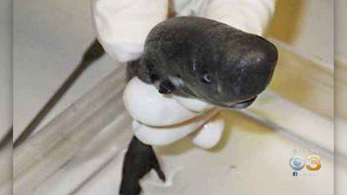 Scientists Discover New 'Light-Emitting' Shark Species