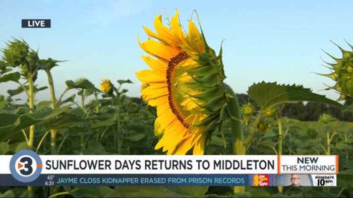 Sunflower days returns to Middleton