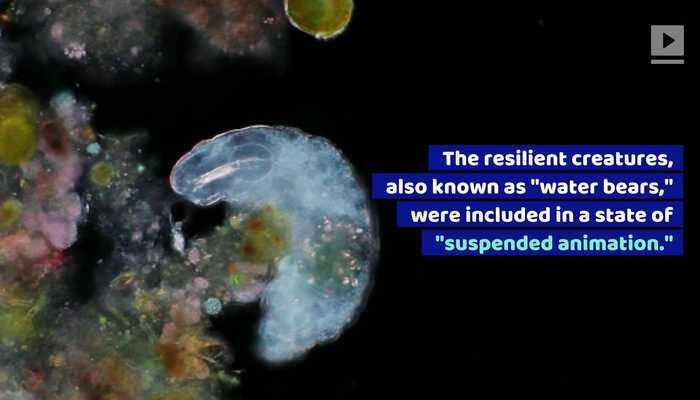 'Water Bears' May Have Crash Landed on the Moon