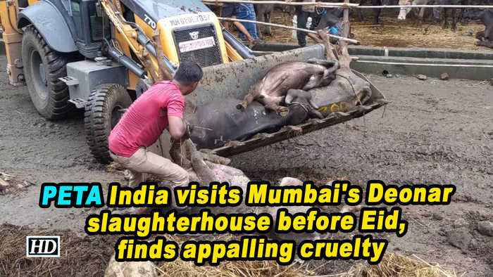 PETA India visits Mumbai's Deonar slaughterhouse before Eid, finds appalling cruelty