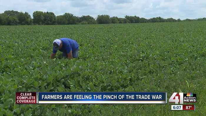 Farmers feel pinch, hope for fair trade agreement as China halts US agriculture purchases