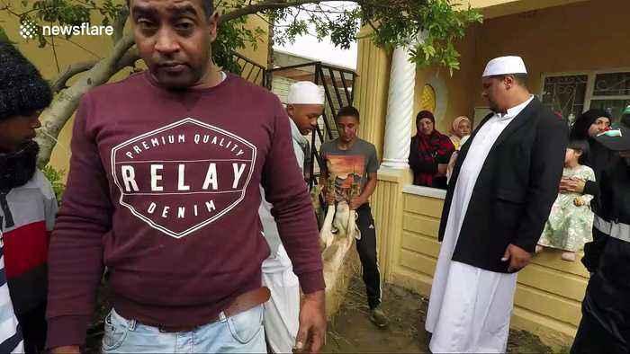 Muslims sacrifice sheep during Eid al-Adha