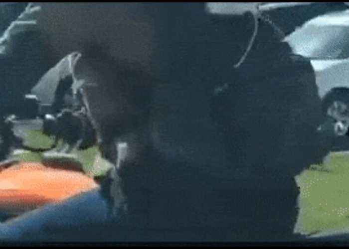 Need For Speed: Goggle-Wearing Dog Hitches a Ride on Biker's Back
