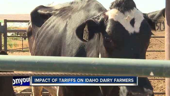 Impact of U.S. trade war on Idaho dairy farmers