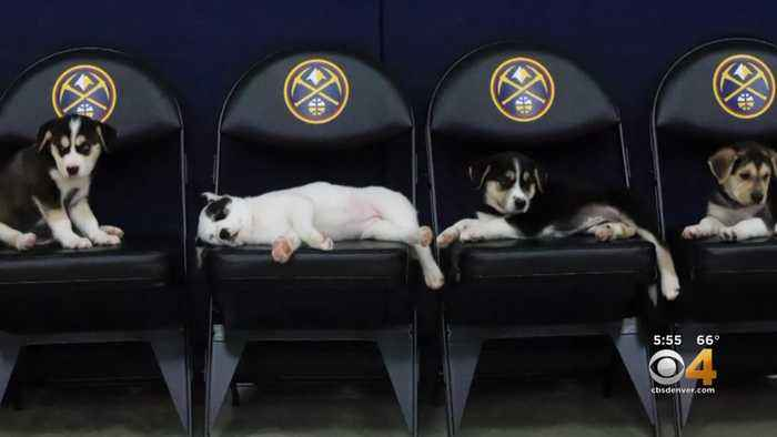 Fun Video Announcing Nuggets 2019-2020 Schedule Features Puppies