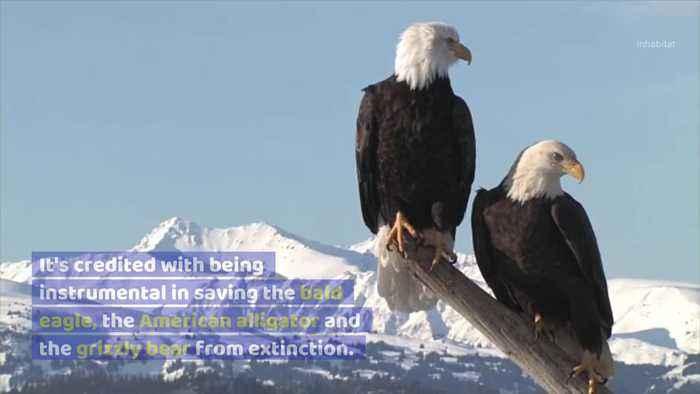 Endangered Species in Worse Danger as US Endangered Species Act Gets Declawed