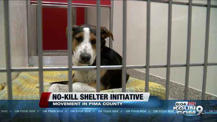 Delaware is now a no-kill animal shelter state. Could Arizona be next?