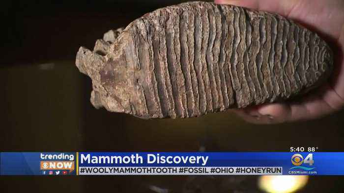 WEB EXTRA: Boy Discovers Woolly Mammoth Tooth At Family Reunion