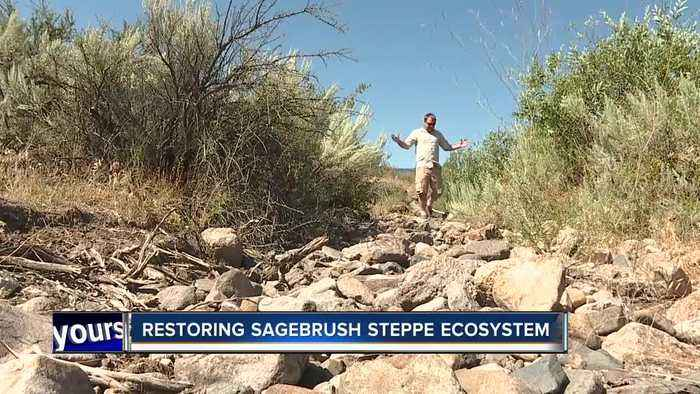 Bruneau Owyhee Sage Grouse habitat project aims to remove juniper trees