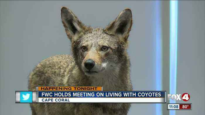Cape Coral holds meeting on Coyote safety