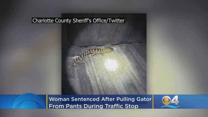 Florida Woman Sentenced After Pulling Gator From Pants During Traffic Stop
