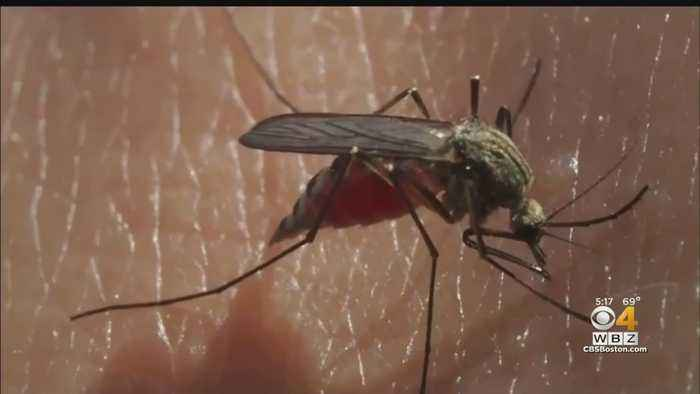 With Unprecedented Levels Of EEE, Falmouth Steps Up Mosquito Spraying