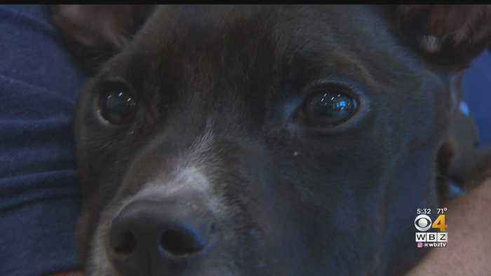 Vets Shocked By Condition Of Dog Found Nearly Starved To Death In Canton