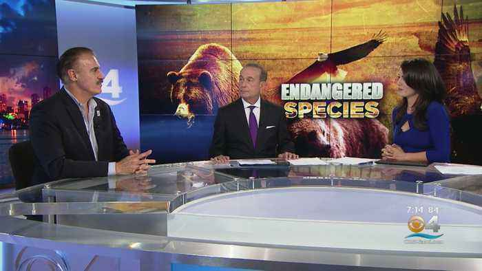 Zoo Miami's Ron Magill Discusses Potential Ramifications Of Trump Administration Scaling Back Animal Protections