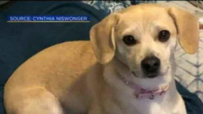 Stolen Comfort Dog Found