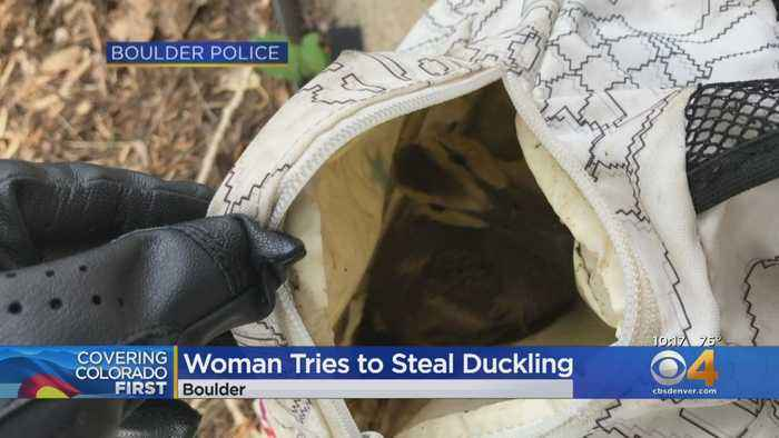 Boulder Woman Tries To Steal Duckling