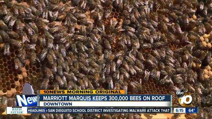 Marriott Marquis using urban bee hives for honey