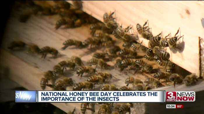 Scatter Joy Acres celebrates National Honey Bee Day