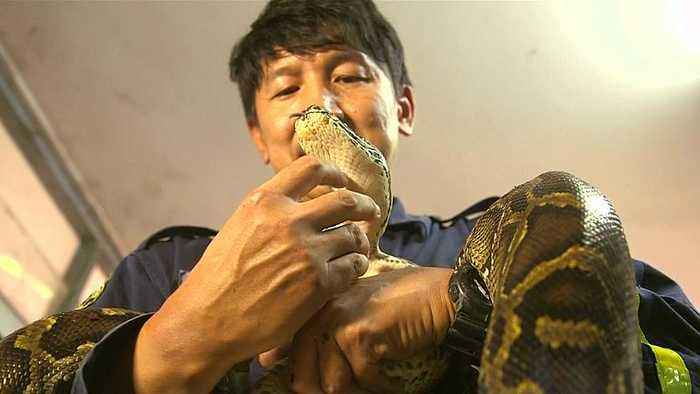 Thailand's self-styled snake wrangler to the rescue