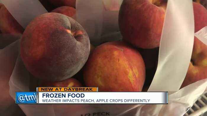 Frozen Food: Weather impacts peach, apple crops differently