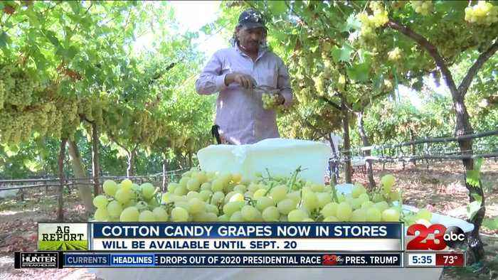Cotton Candy Grapes are now in stores, and they are selling fast