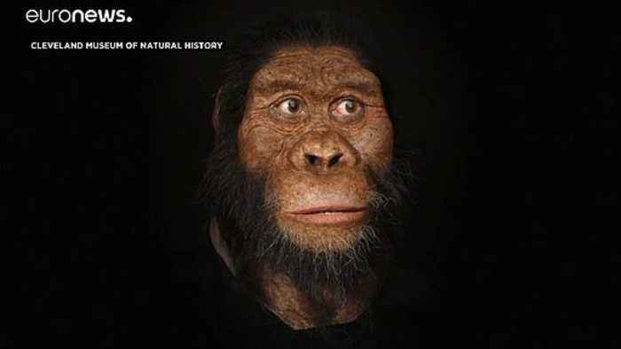Fossil discovery reveals face of oldest early human ancestor