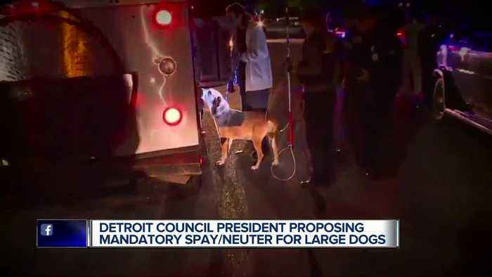 Detroit council president proposing mandatory spay/neuter for large dogs in wake of girl's death won't be charged in a