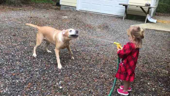 Little Girl Giggles When Dog Tries to Bite Water Coming Out of Hose