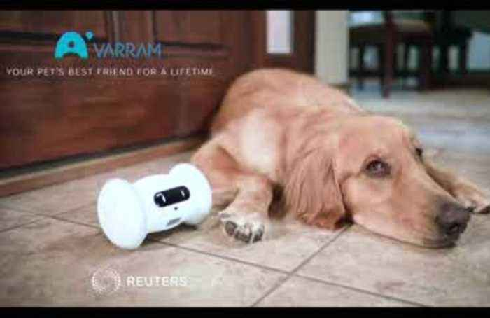 Creepy or cute? Robot pals for you and your dog