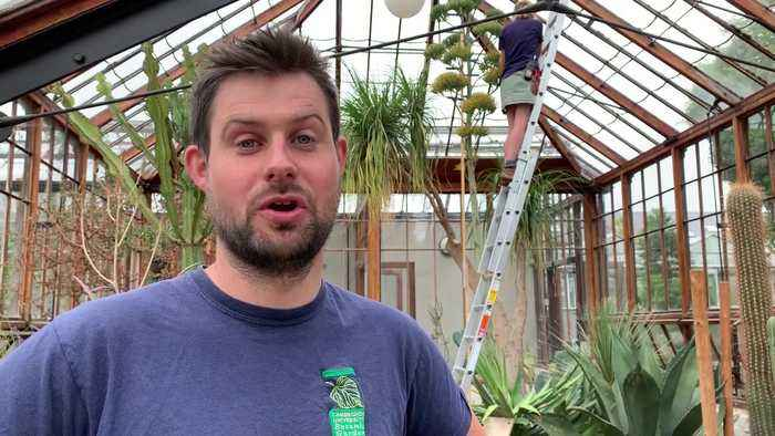 60 year wait for 'tequila plant' flower to bloom
